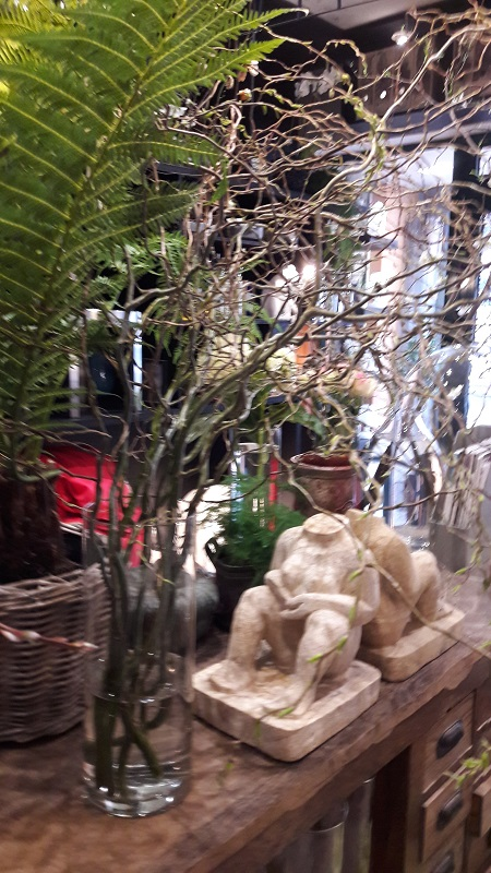 Branchage saule tortuosa