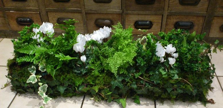 Jardinière de plantes 2