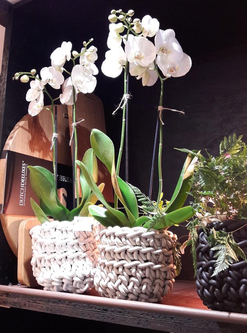 La pergola fleur blanche
