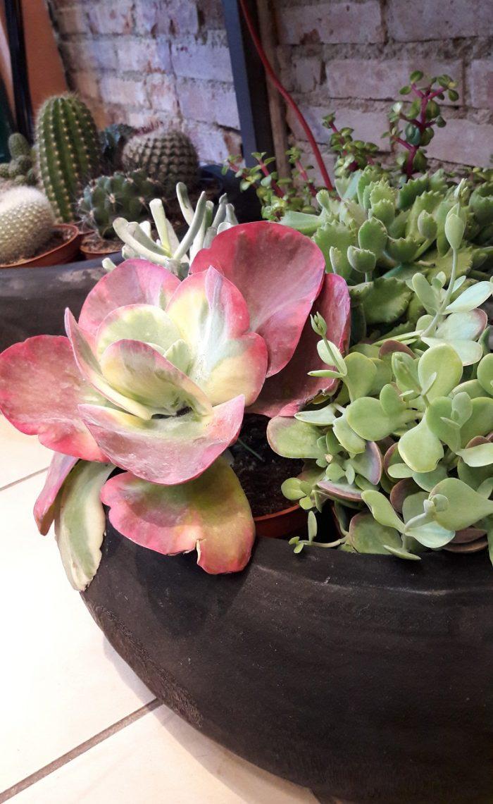 La pergola fleuriste plantes grasses